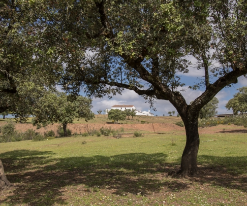 Country House for sale in Sierra de Huelva (2307)
