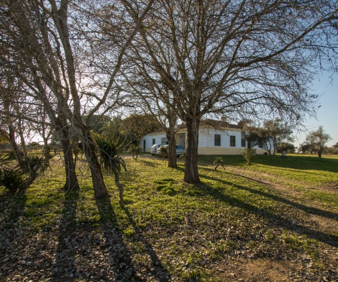 Country House for sale in Doñana (2396)